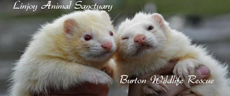 Burton Wildlife Rescue